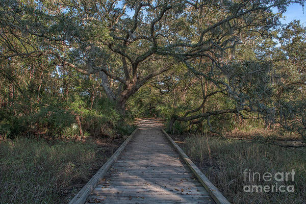 Photograph - Daniel Island Walking Trail by Dale Powell