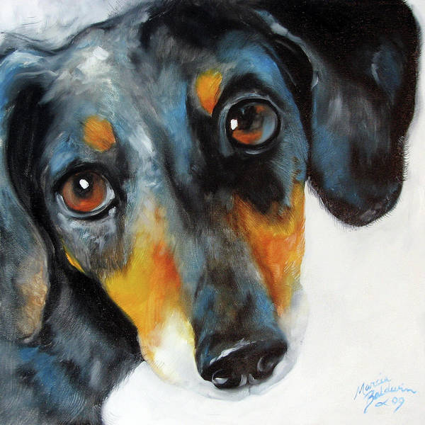 Painting - Dapple Doxie by Marcia Baldwin