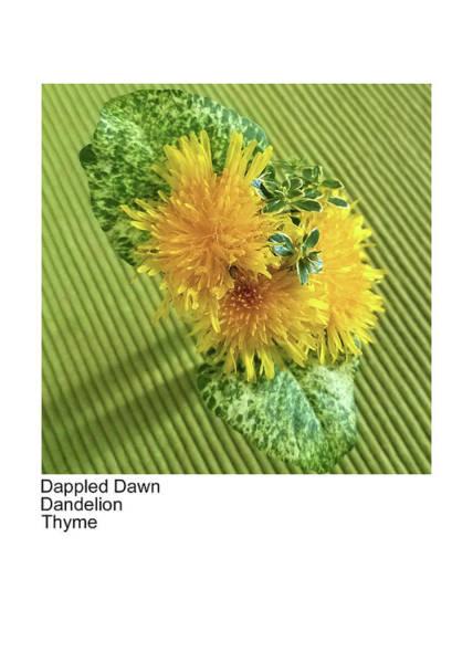 Photograph - Dappled Dawn, Dandelion, Thyme by Betsy Derrick