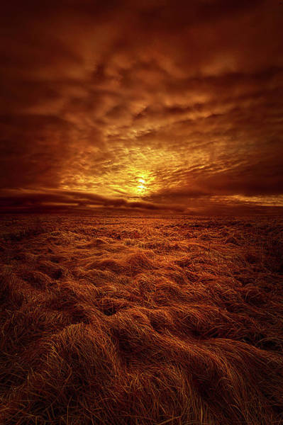 Photograph - Dare I Hope by Phil Koch