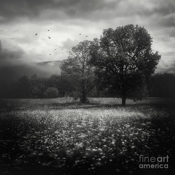 Photograph - Dark Beauty Series 3 by Yucel Basoglu