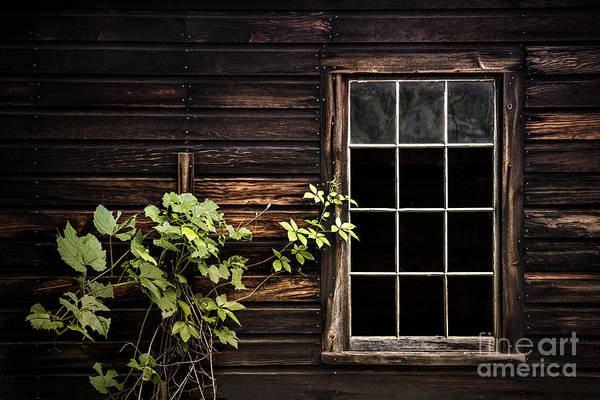 Abandoned House Photograph - Dark Entanglement by Evelina Kremsdorf