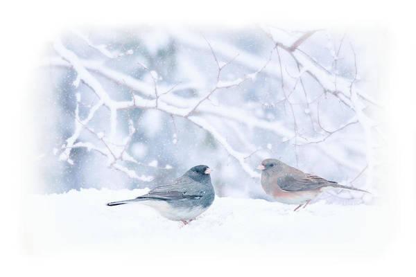 Dark Eyed Junco Photograph - Dark-eyed-juncos In Snow by Barbara Hymer