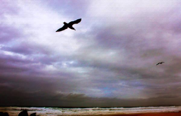 Newcastle Digital Art - Dark Flight by Susan Vineyard