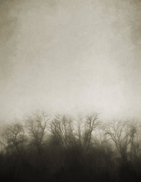 Foggy Wall Art - Photograph - Dark Foggy Wood by Scott Norris