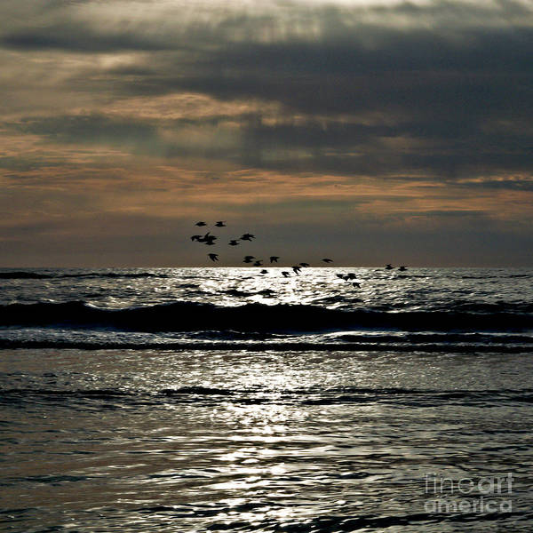 Photograph - Dark Foray Over The Sparkling Danish Sea  by Silva Wischeropp