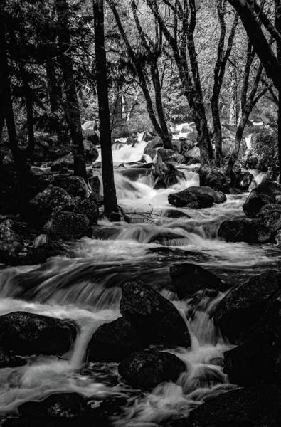 Photograph - Dark Forest Bright Water by Ross Henton