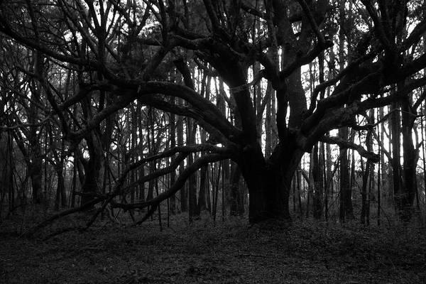 Photograph - Dark Forest by Cynthia Guinn