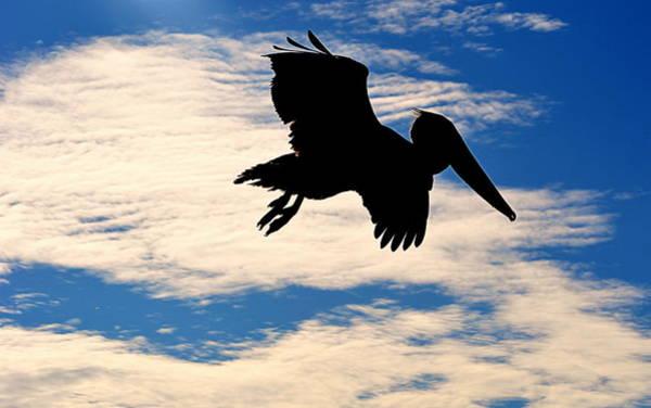 Photograph - Dark Pelican by AJ Schibig