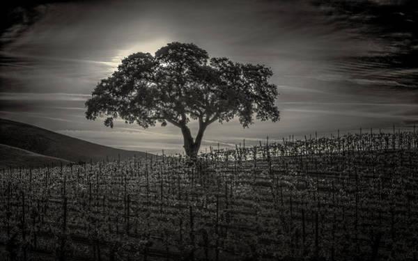 Grapevine Photograph - Dark Sunrise by Joseph Smith