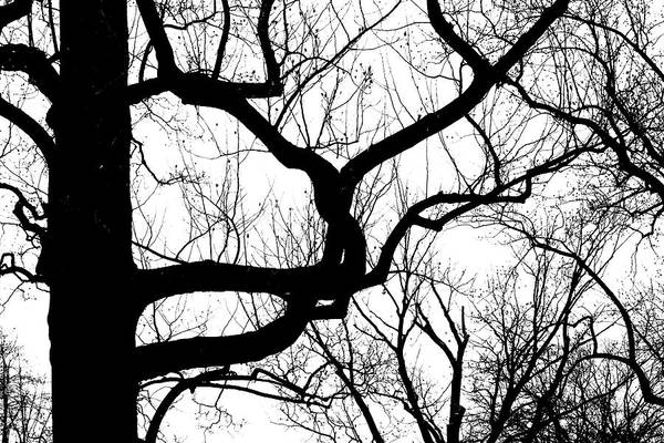 Photograph - Dark Tangle by Cate Franklyn