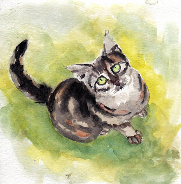 Painting - Dark Torbie by Mimi Boothby