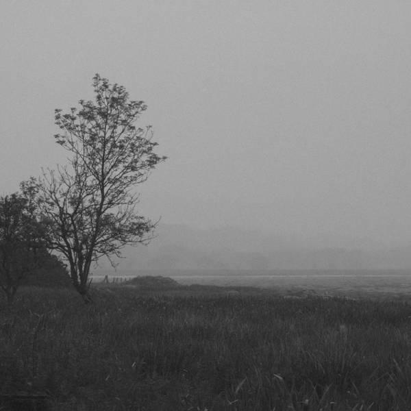 Grey Cloud Photograph - Dark Tree by Chris Dale