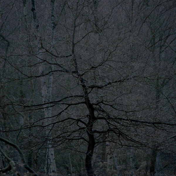 Nottinghamshire Photograph - Dark Tree In A Dark Wood by Chris Dale