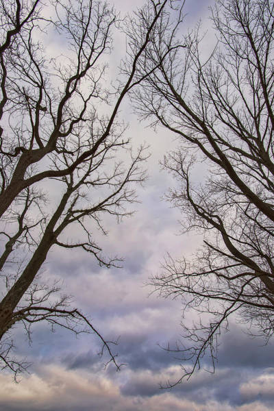 Photograph - Dark Trees And Colorful Sky by Gary Slawsky