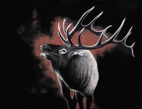 Bugling Drawing - Dark Wapiti by Lydia Smith