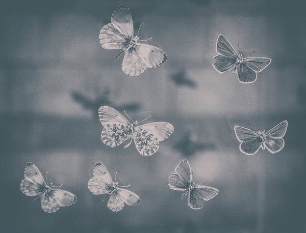 Wall Art - Photograph - Darkened Butterflies by Martin Newman
