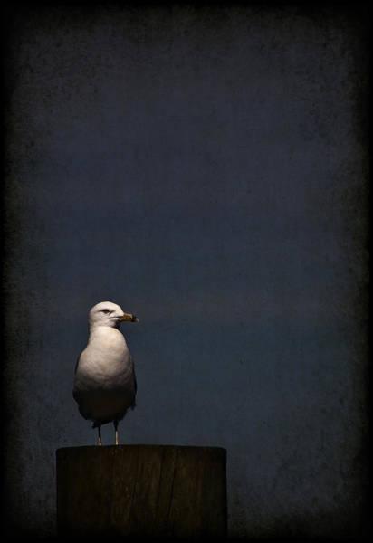 Gull Photograph - Darkness Falls by Evelina Kremsdorf