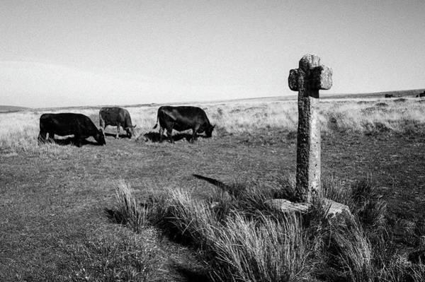 Photograph - Dartmoor Cross IIi by Helen Northcott