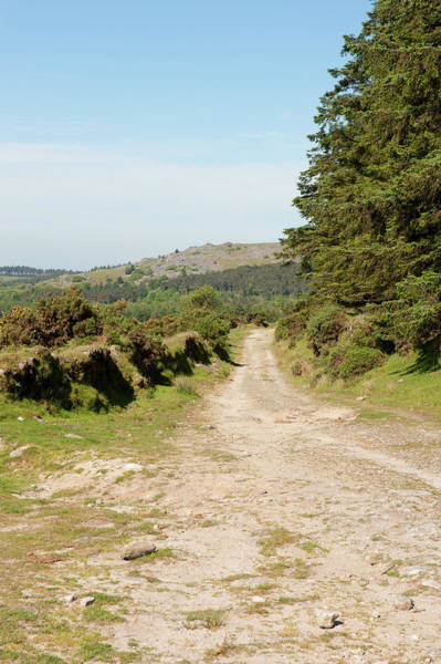 Photograph - Dartmoor In The Sun Iv by Helen Northcott