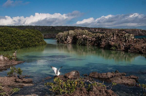 Photograph - Darwin Bay     Genovesa Island      Galapagos Islands by NaturesPix