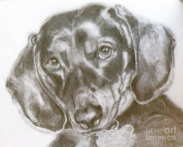 Wall Art - Painting - Daschund Pencil Drawing by Susan A Becker