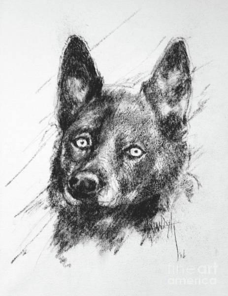 Hund Drawing - Dash by Anthony Vandyk