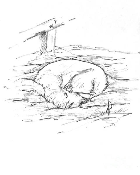 Hund Drawing - Dash Asleep In The Snow by Anthony Vandyk