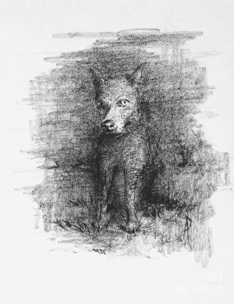 Hund Drawing - Dash Is Afraid Of The Dark by Anthony Vandyk