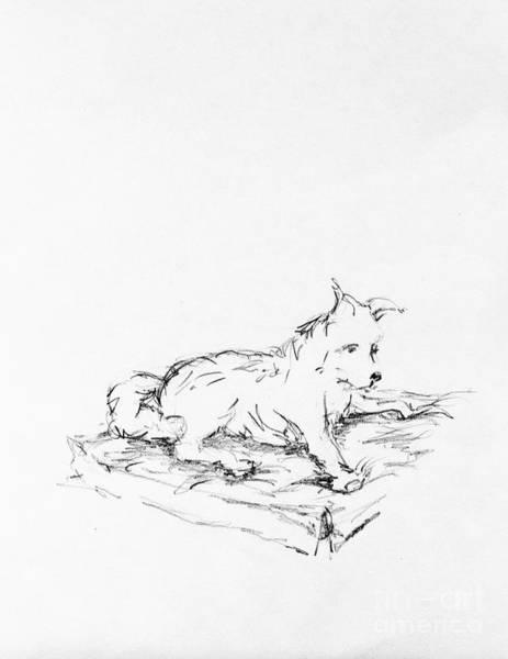 Hund Drawing - Dash Lays by Anthony Vandyk