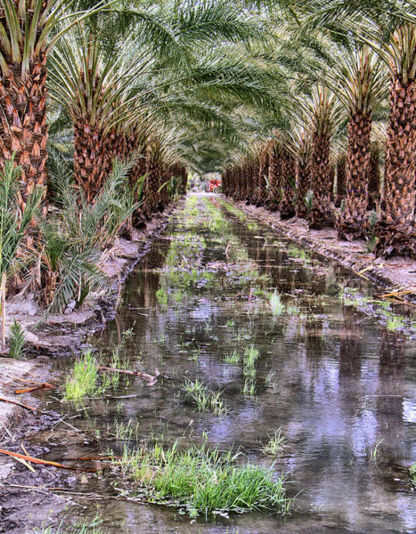 Rancho Mirage Photograph - Date Grove by Dominic Piperata