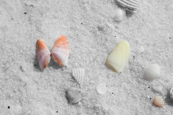 Photograph - Dauphin Shells by Dylan Punke