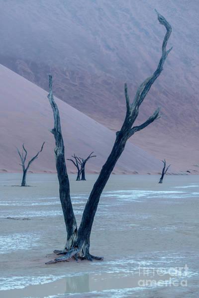 Wall Art - Photograph - Dawn At Deadvlei - Namibia by Sandra Bronstein