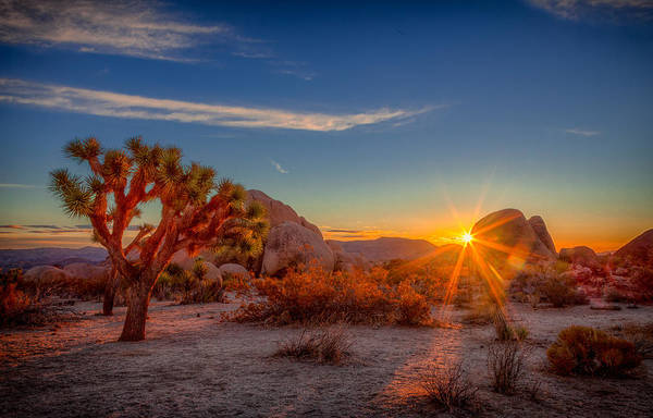 Photograph - Dawn At Joshua Tree by Rikk Flohr