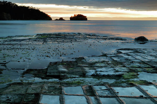Photograph - Dawn At The Tessellated Pavement by Nicholas Blackwell