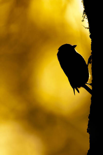 Photograph - Dawn Climber by Simon Litten