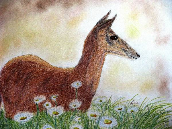 White Tailed Deer Drawing - Dawn In The Daisies by Angela Davies