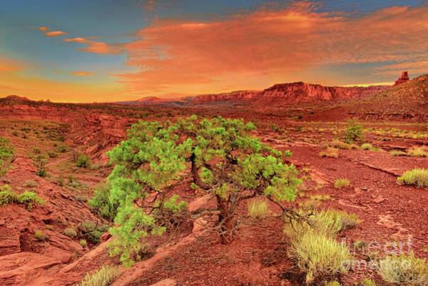 Photograph - Dawn Light Capitol Reef National Park Utah  by Dave Welling