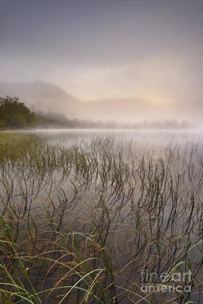 Wall Art - Photograph - Dawn Mist - Loch Achray 2 by Rod McLean