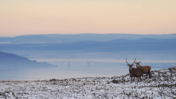 Photograph - Dawn Of A New Day Above The Beauly Firth by Gavin Macrae