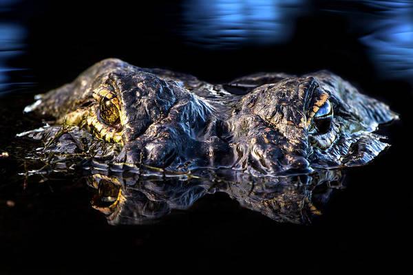 American Crocodile Photograph - Dawn Of A Predator by Mark Andrew Thomas