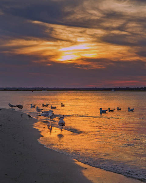 Rising Water Photograph - Dawn Of Sunset by Betsy Knapp