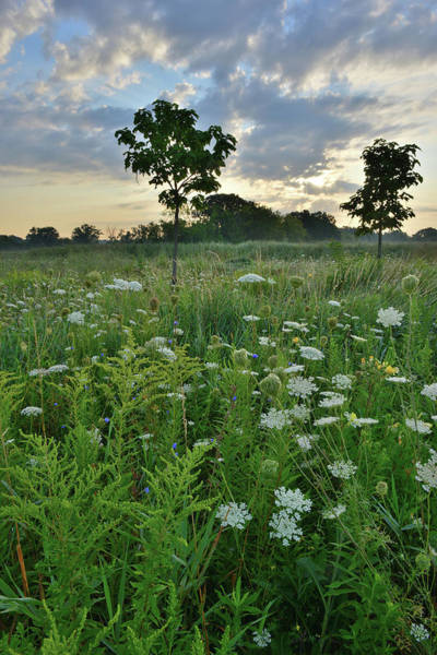 Photograph - Dawn Over Lakewood Prairie by Ray Mathis