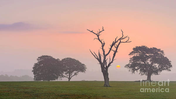 Wall Art - Photograph - Dawn Rising New Forest by Richard Thomas