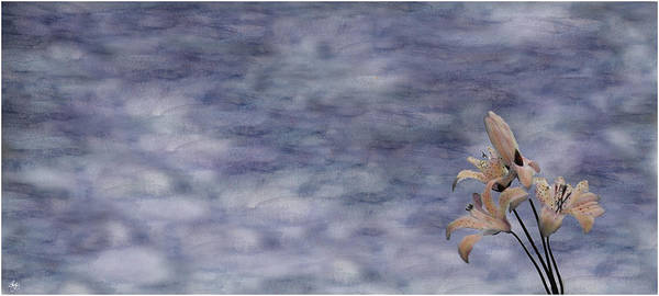 Photograph - Day Lily Against A Painted Sky by Wayne King