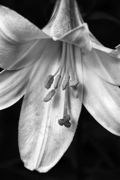 Photograph - Day Lily Closeup by Dick Pratt