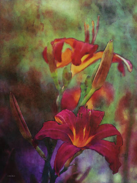 Photograph - Daylilies 2641 Idp_2 by Steven Ward