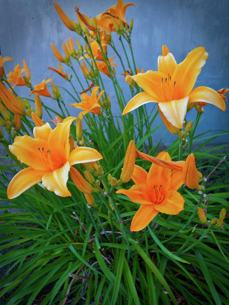 Digital Art - Daylilies  by Gary De Capua