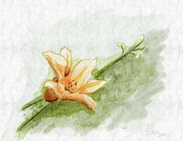 Tigerlily Wall Art - Digital Art - Daylily #1 by Jon Munson II