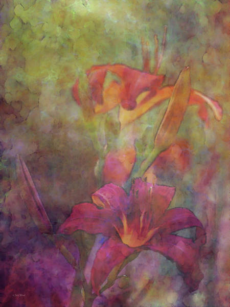 Photograph - Daylily Dream 2641 Idp_3 by Steven Ward